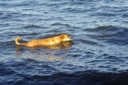 Matisha swimming